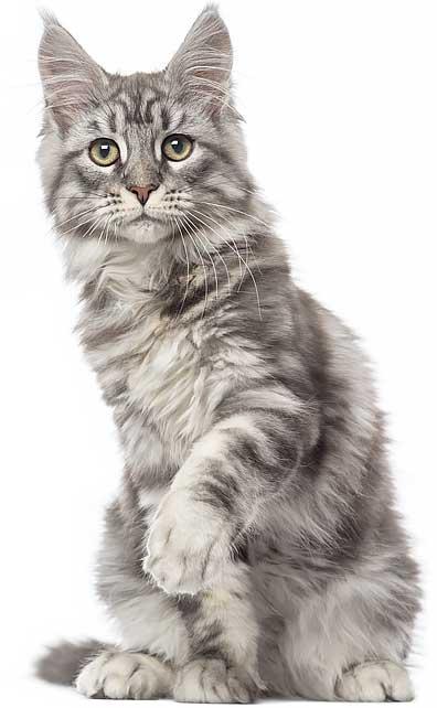 cat-top-fix